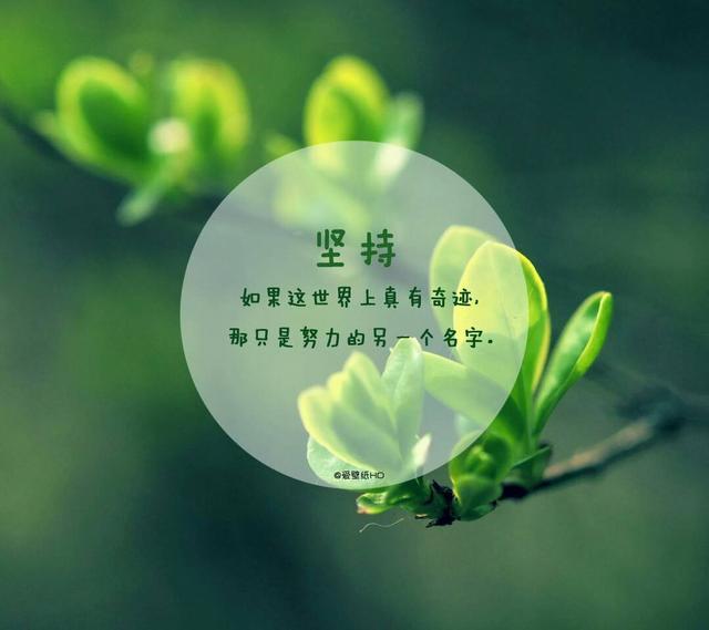 荷花的句子,10句很经典的励志短句,荷花虽好,也要绿叶扶持