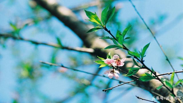 关于花的短句,很唯美的句子,花开成景,花落成诗(分享)