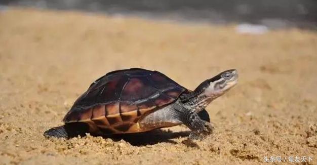 金钱龟图片,关于石金钱龟及金钱龟的一切,看完了我懂了!
