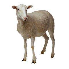 男属羊和女属猪,属羊女孩和什么属相男最配?