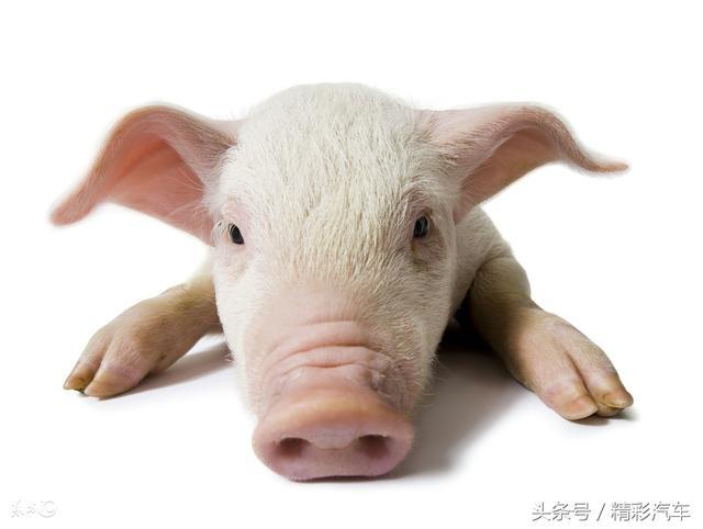 1983年属猪运势,属猪人,尤其是71、83年的!好运来了,接住!