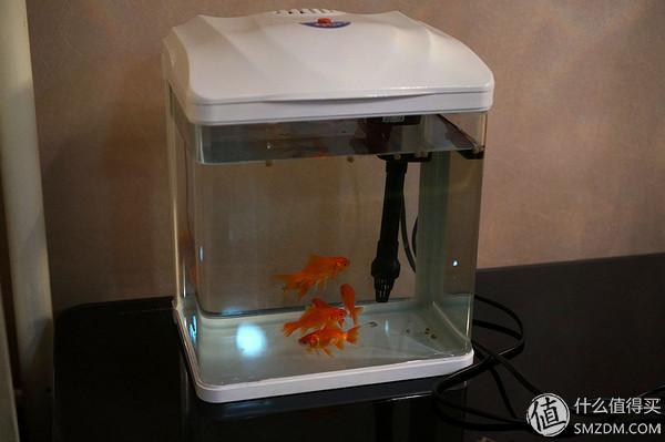 鱼缸图片,先有鱼后有缸:晒森森小水族箱 HR230 及插头改造