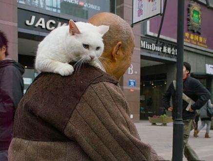 """小猫的好句,猫咪:""""让我用无声陪伴你,陪伴是最长情的告白!"""""""