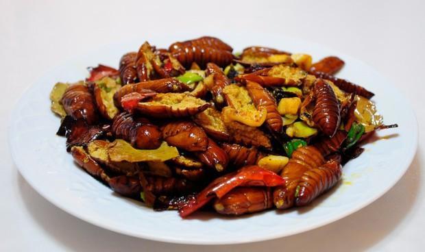 干煸蚕蛹的做法,河南农村小炒:干煸蝉蛹,香辣可口呀