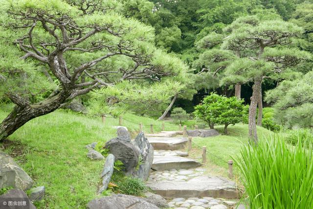 油松图片,常绿乔木之油松(红皮松、短叶松)