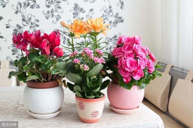 """冬天开的花有哪些,这4种花冬天盛开,香味浓郁,开一朵就能""""熏香一室"""""""