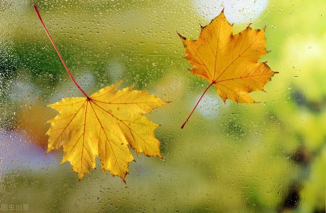 秋天的句子,51句经典秋日诗词,抒发这个美丽的秋天