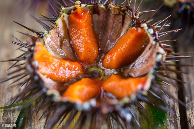 海胆的吃法,海胆是什么?怎么吃?海胆养殖和加工可能成为渔民增收的来源之一
