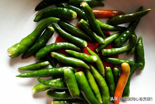 蜗牛的吃法与做法,每天一道徐州特色菜:春天到了,一起来辣椒爆炒蜗牛肉吧!