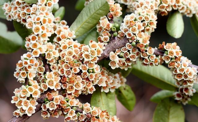 蜂蜜品种,最好吃的十种蜂蜜,没吃过真是人生遗憾,最好的一种古代是贡品