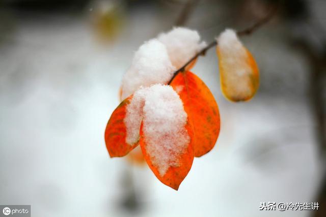 关于冬天的句子短句,描写冬天的优美句子集