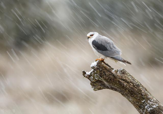 描写冰的诗,10首古诗词让你懂得如何表达:冷冷冷