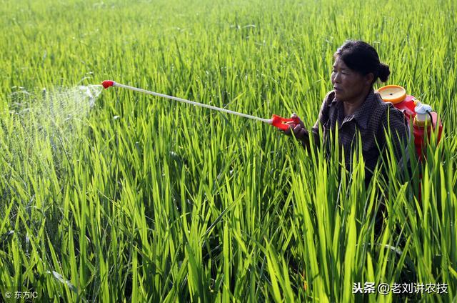 农药品种,农药植保:菜农常用的23种农药,务必要搞清楚,避免产生要害!