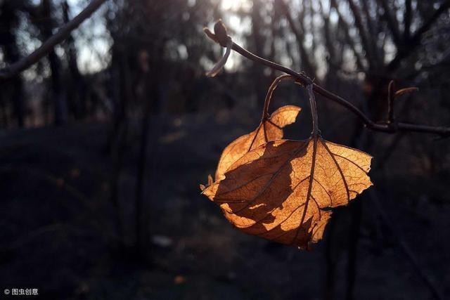 一句简短的风景句子,一句话简单的心情签名句子,唯美走心,温暖阳光!