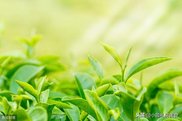 抹茶怎么做,绿茶不单止好喝,还可以做各式甜,学会做沫茶粉,做什么甜品都行