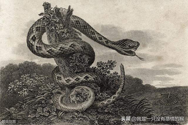 解梦 蛇,故事:民间故事:蛇梦