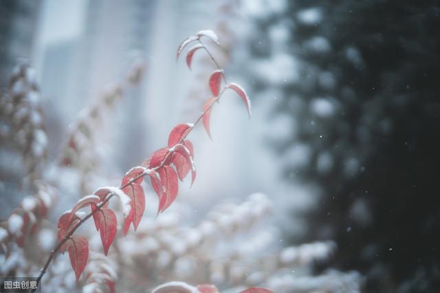 雪里红图片,小雪:天真是你,烂漫也是你