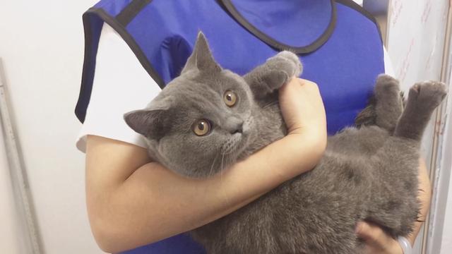 你真的會抱貓嗎?5種常見的抱貓姿勢,但3種都是錯的 家有萌寵 第5张