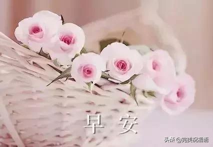 早安祝福语,早晨唯美祝福语 早上好问候语大全