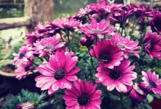"""种漂亮花卉,四季都能开花,真怕它累坏了"""""""