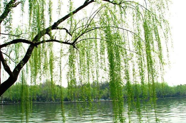 二月春风似剪刀的全诗,贺知章笔下最美春天,短短四句都是千古名句,结尾更千年无人能越
