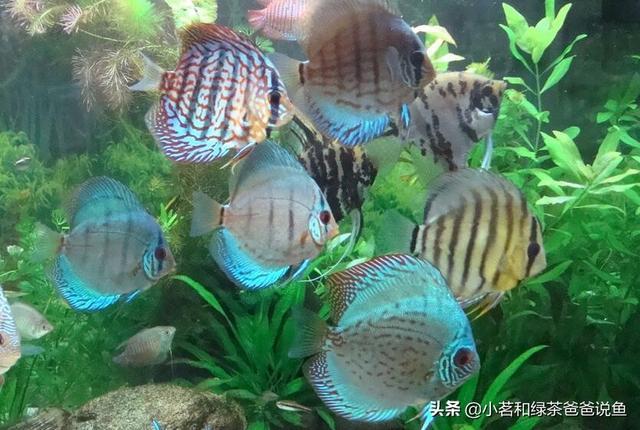 鱼品种,常见观赏鱼的种类大全,记住名字避免选购时眼花缭乱