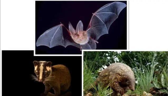 哺乳动物有哪些,哺乳动物演化简史!