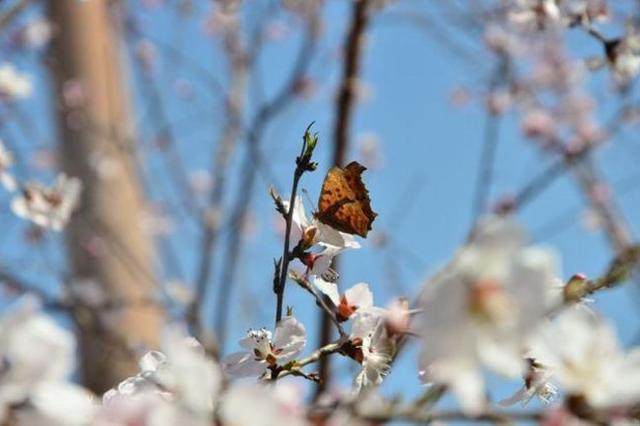 关于蝴蝶的诗,【诗词鉴赏】飞在春天诗词里的蝴蝶
