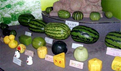 西瓜的品种,吃瓜季节到了,这13种不同品种的西瓜,你是不是全都品尝过呢