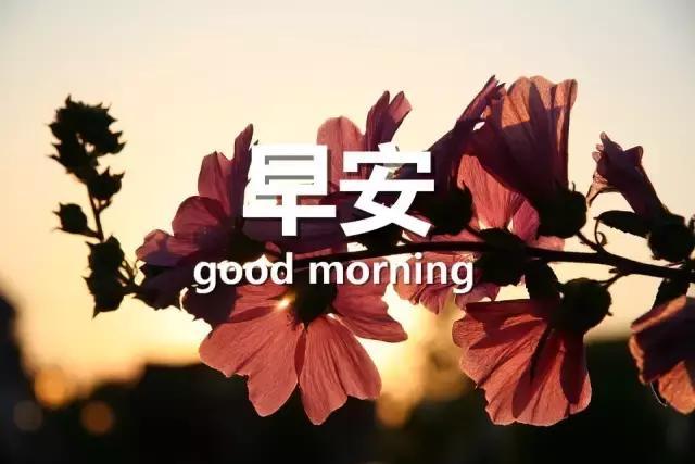 群发消息.,新的一周早上好简短早安短信群发祝福语