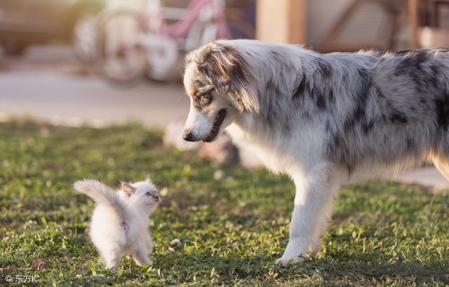 """犬字开头的成语,关于""""dog""""的英文成语/谚语,赶紧学起来吧!"""