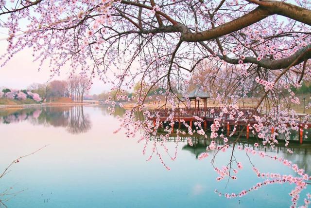 春天的诗句,三月到,百花开!吟一首诗词,赏一树花开
