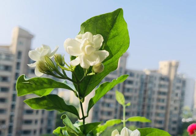 关于花的诗,一种花,一首诗,6种花你最钟爱哪一种?