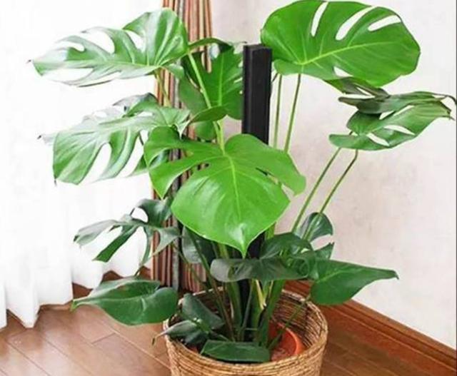 适合客厅养的5种植物,美观大方,还有益健康