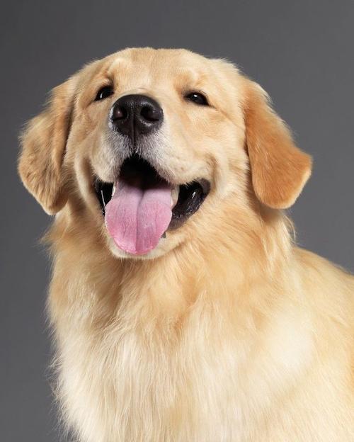 婴儿 狗,狗狗对小宝宝越来越亲近,常常守在他身边,后来还经常充当肉垫