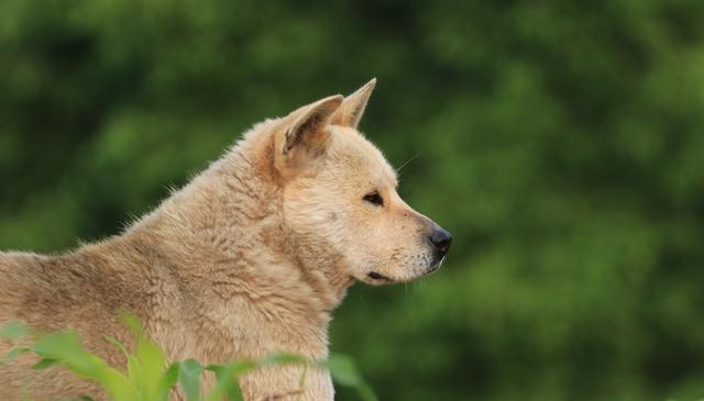 流浪狗的誕生,並非愛狗人士遺棄,它只是一個時代的犧牲品罷了 家有萌寵 第8张