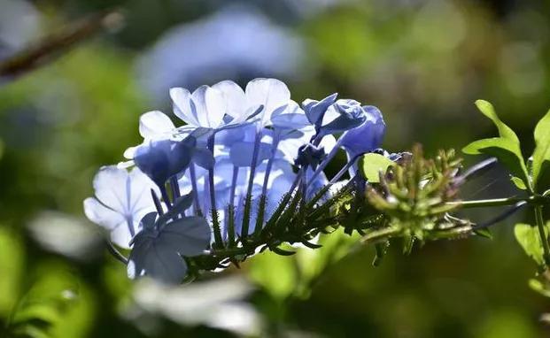 关于理想的句子,有梦想的年轻人句子:即使闻不到花香,也别忘了生活的芬芳