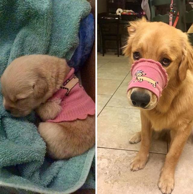 狗图片,一群狗狗长大前后的对比照片,画面萌化了