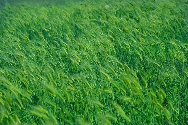 寓意金的字,唐五代词中的绿色,绿树浓荫得清凉