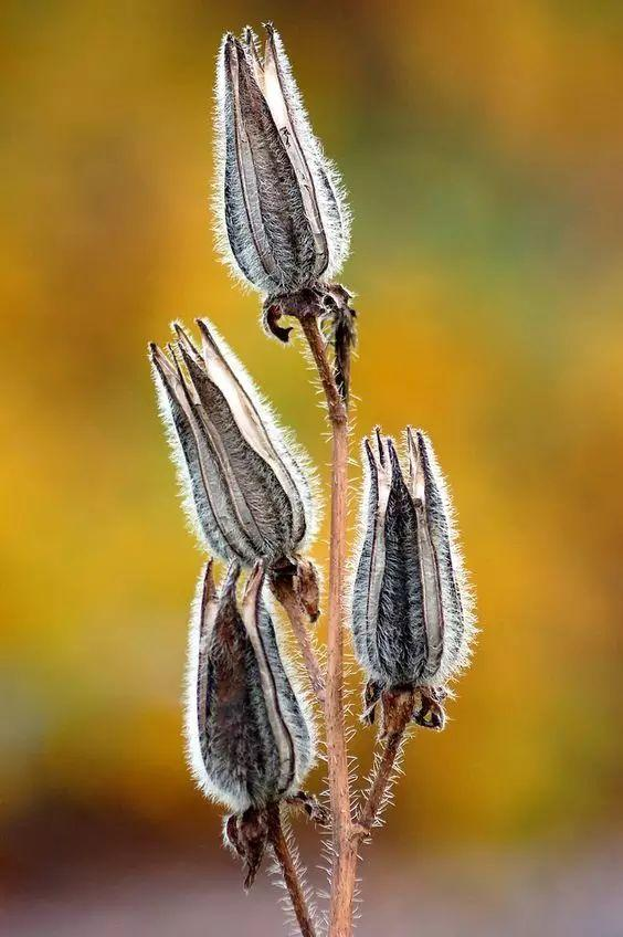 世界上46种罕见的植物