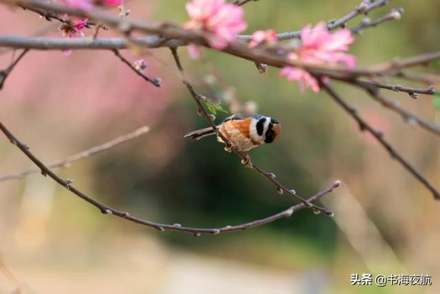 小鸟的诗,当诗词遇见鸟儿,灵动可爱又惊艳!