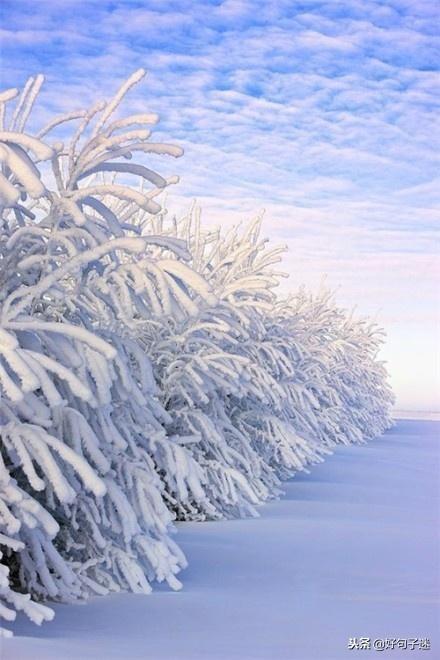 下雪短句,雪天的心情经典句子,文艺优雅,沁人心脾!
