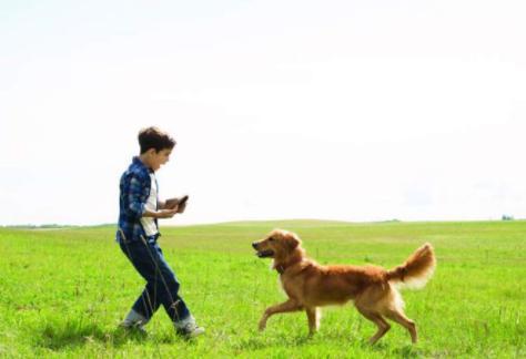 的意义,一条狗活着的意义是什么?为了自己的使命,甘愿奉献自己的一生