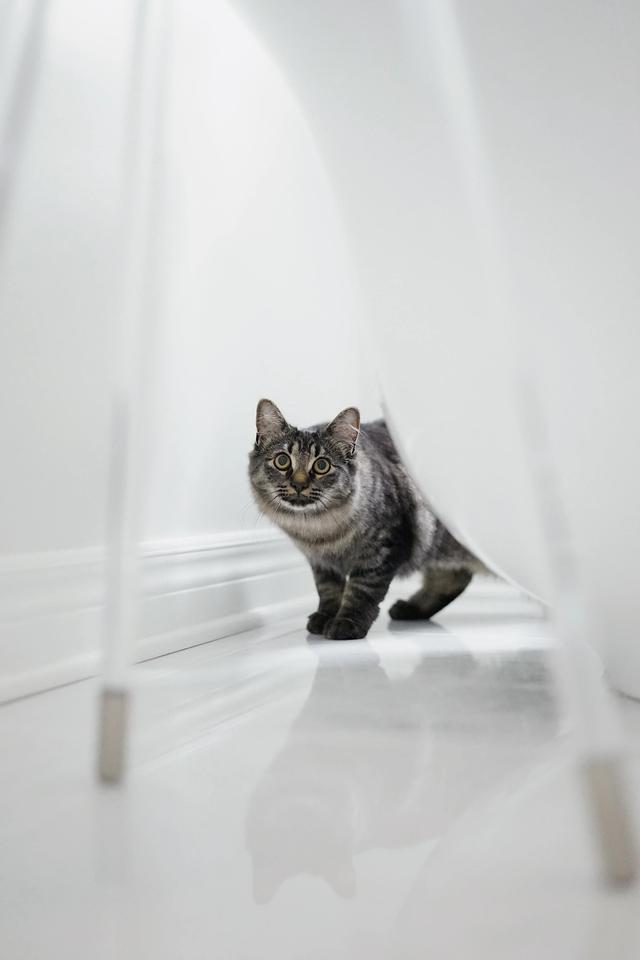 猫咪图片,分享一组比较可爱的猫咪壁纸