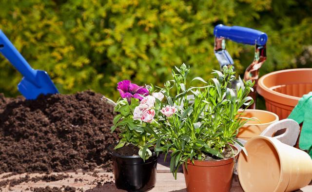 """草本植物有哪些,5种草本植物,""""天生""""爱开花,新手可以种一些,很合适"""