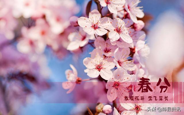 春分的寓意,今日春分  最是人间好时光