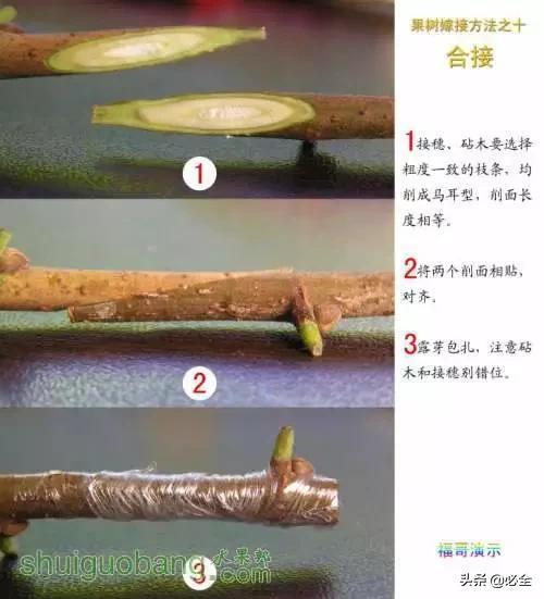 """2种果树嫁接技术,实操配图+细节讲解"""""""