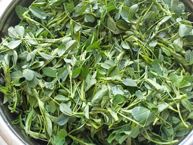 苜蓿菜的做法和吃法,春天把这菜蒸一蒸,滋味十足,简单营养补钙,配上蘸料一盘不够吃