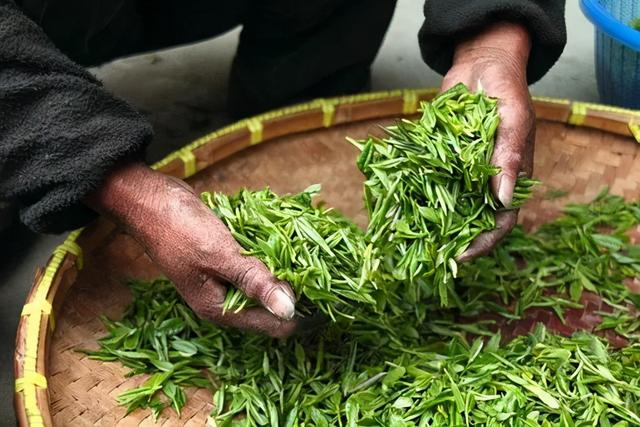 """茶叶的吃法,茶叶放得越久越好?过了保质期还能喝吗?喝茶的正确""""姿势"""",掌握了才受益"""