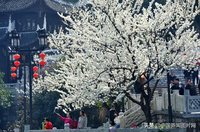 消息图片,贵州贵阳:春暖花开